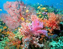 coral colours